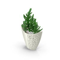 Cactus in Pot Object