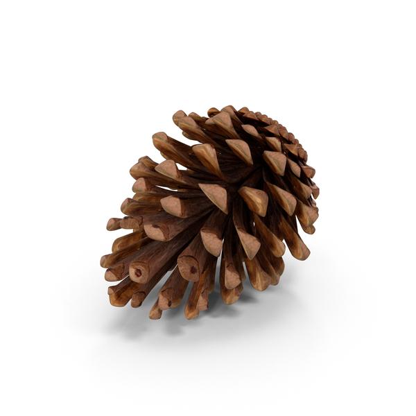 Fir Cone Object