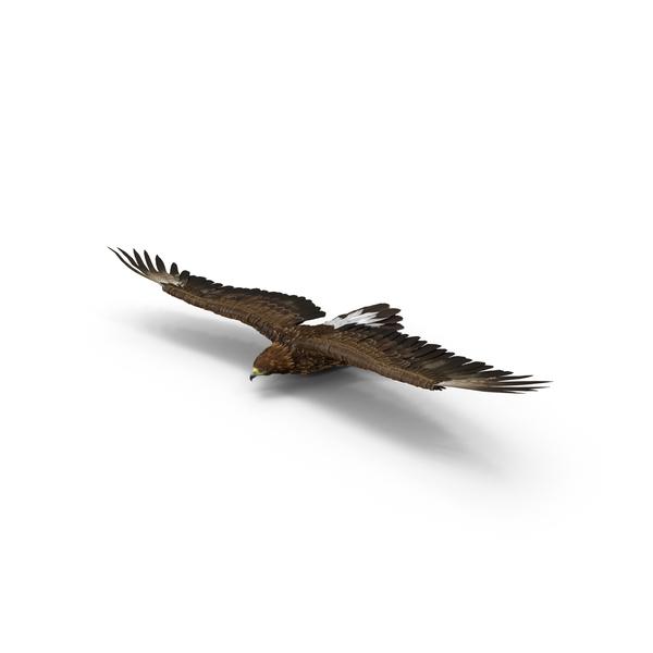 Golden Eagle Gliding Object