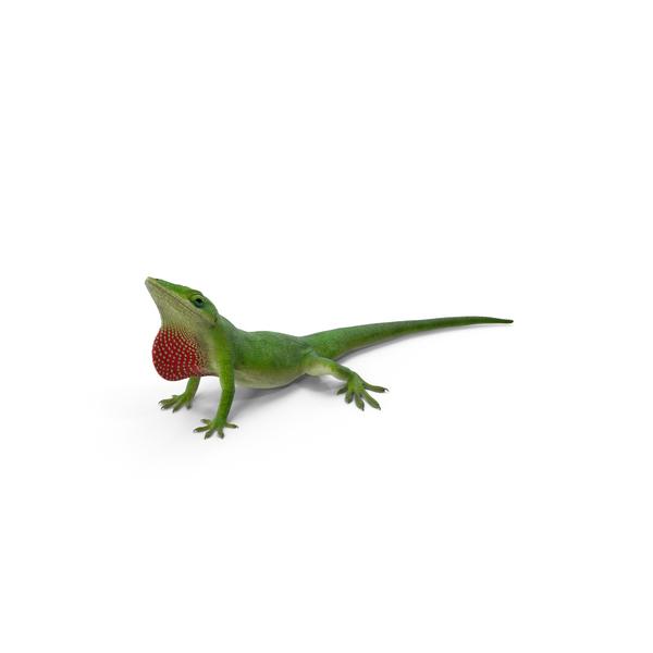 Carolina Anole Lizard Object