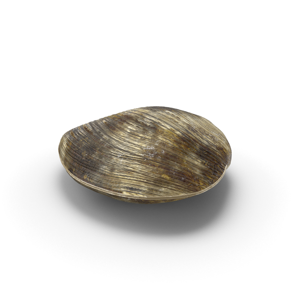 Clam Object