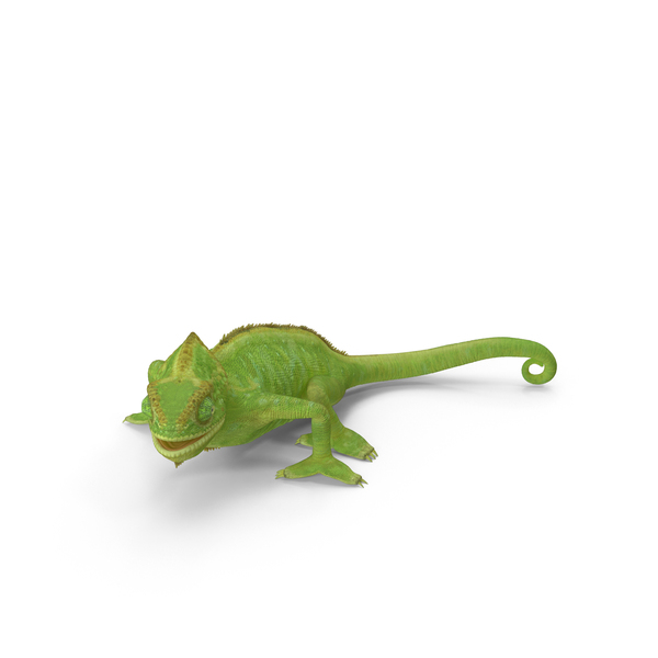 Chameleon Walking Object