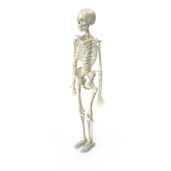 Low Poly Skeleton Object